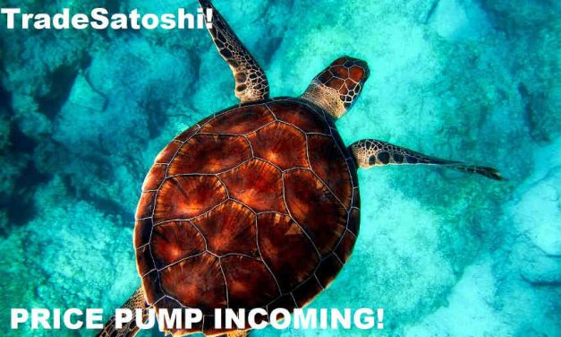 TradeSatoshi.com Is About to List TurtleCoin! Imminent Price Boost!