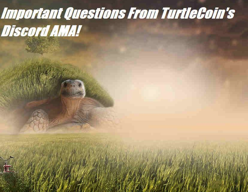 HAPPENING NOW: Top Questions and Answers From Tonight's TurtleCoin AMA